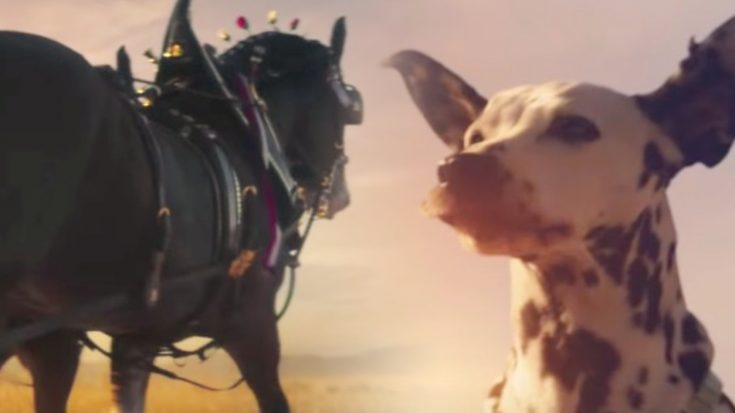 Budweiser Clydesdales Return In Brilliant Bob Dylan-Themed Super Bowl Ad