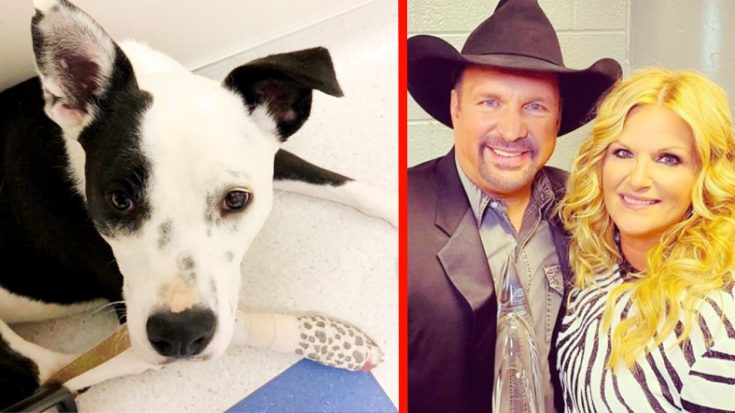 Garth Brooks & Trisha Yearwood's Dog Suffers Toe Injury After Walk On Trail