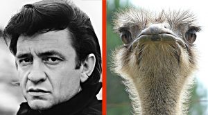 True Story: Johnny Cash Once Fought An Ostrich With A Stick