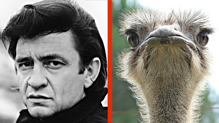 True Story: Johnny Cash Once Fought An Ostrich With A Stick | Classic Country Music Videos