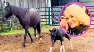 Tanya Tucker Adopts 2 New Horses, Asks For Help Naming Them